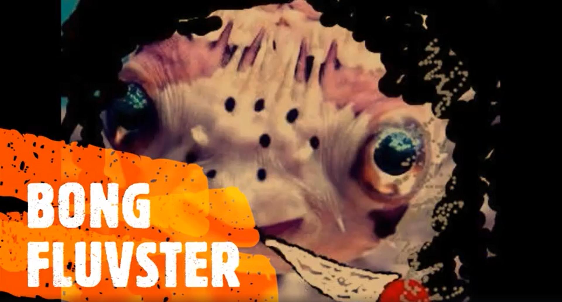 Bong Fluvster & more